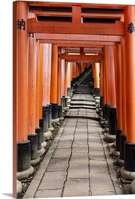 Japan Rising Sun Collection - Torii Gates in Fushimi Inari Shrine