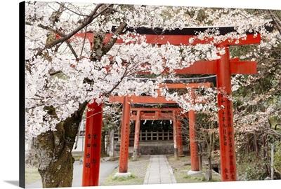 Japan Rising Sun Collection - Yoshida Shrine Torii