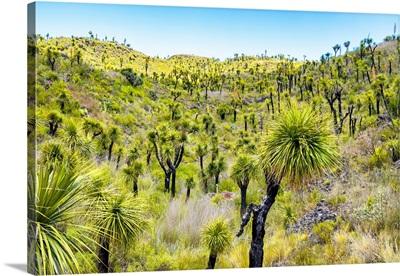 Mexican Vegetation II