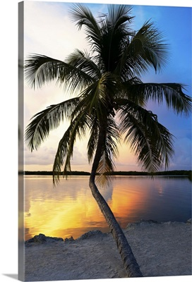 Palm Tree at Sunset, Florida