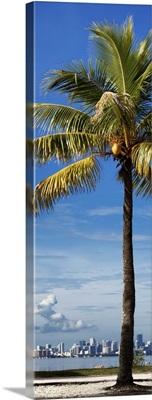 Palm Tree overlooking Downtown Miami, Florida