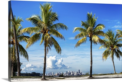 Palm Trees overlooking Downtown Miami