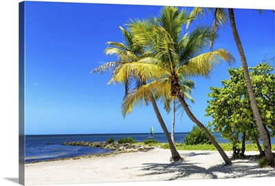 Palms on a White Sand Beach in Key West