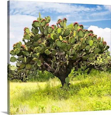 Prickly Pear Cactus I