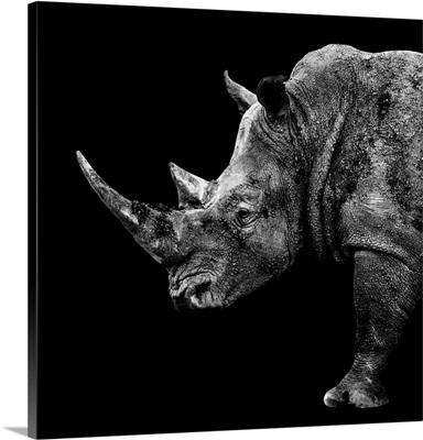 Rhino Black Edition II