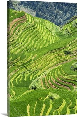 Rice Terraces, Longsheng Ping'an, Guangxi