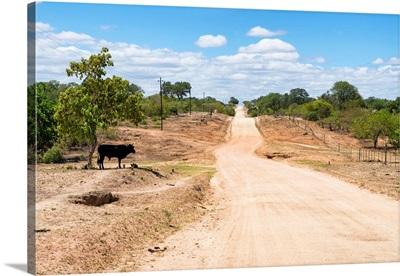 Road in the African Savannah