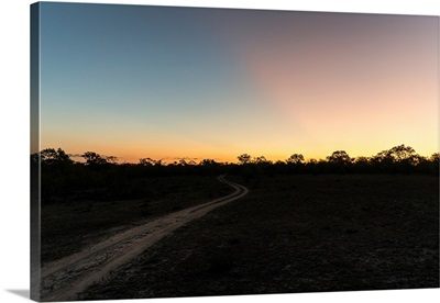 Road in the Savannah at Sunset
