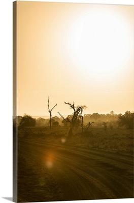 Savanna at Sunrise IV