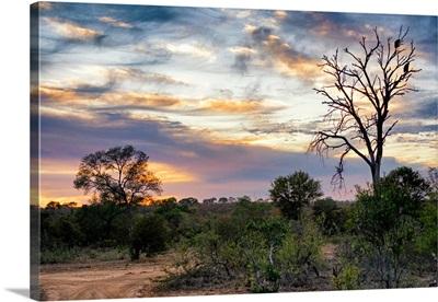 Savanna Landscape at Sunrise