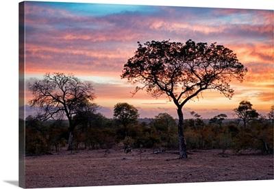 Savanna Trees at Sunrise I