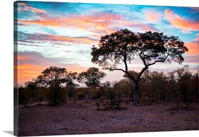 Savanna Trees at Sunrise II