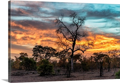 Savanna Trees at Sunrise III