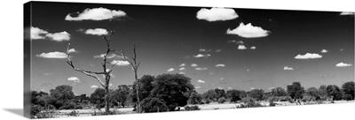 Wide Landscape Black and White