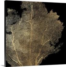 Honeycomb Coral I