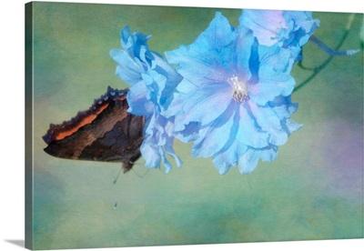 Delphinium Butterfly