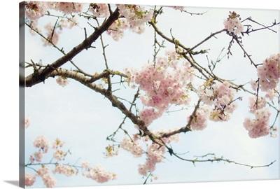 Hopeful Blossoms