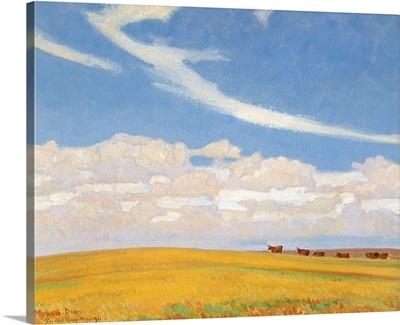 Prairie After Storm
