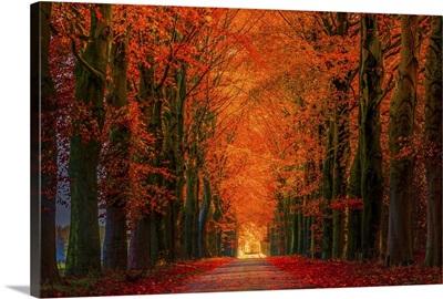 Autumn Strawl