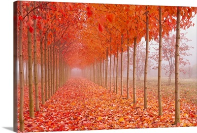 Autumn's Cathedral