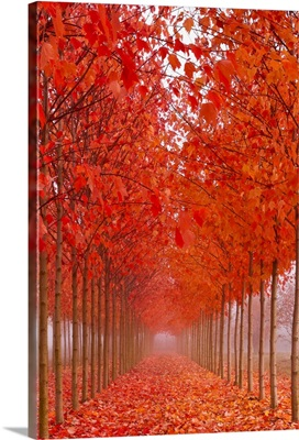 Autumn's Cathedral II