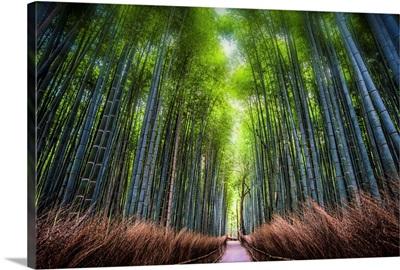 Bamboo Overdose