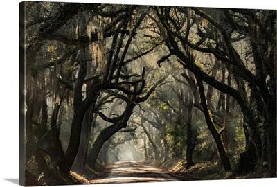 Carolina Canopy Road