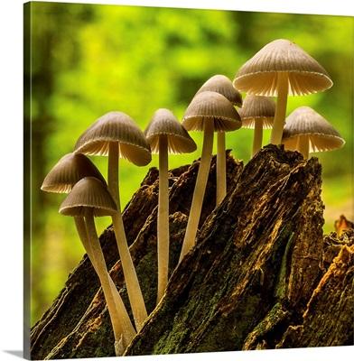 Climbing Fungi