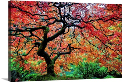 Fall Color at the Portland Japanese Garden