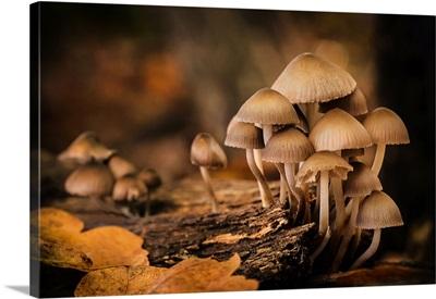Fungi At Sunset