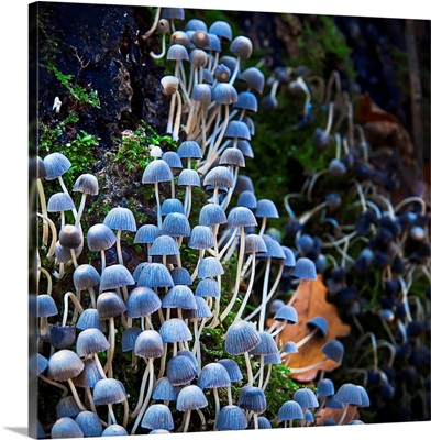 Fungi Multitude