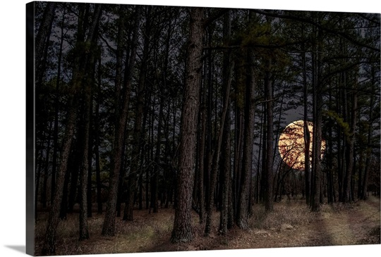Forest Wall Art moonrise forest wall art, canvas prints, framed prints, wall peels