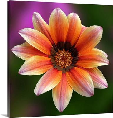 Multicoloured blossom