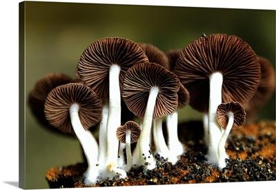 Mushroom Skin
