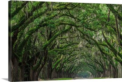 Oak Avenue, Wormsloe Historic Site, Savannah, GA