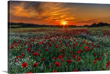 Poppies and Sunset Colors