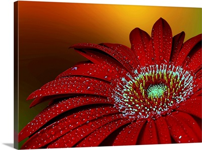 Radiant beauty