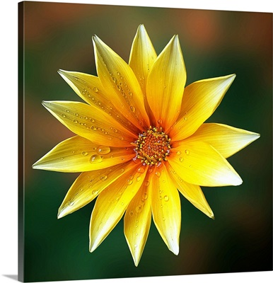 Symmetrical Blossom