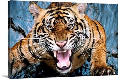 Tiger Scream