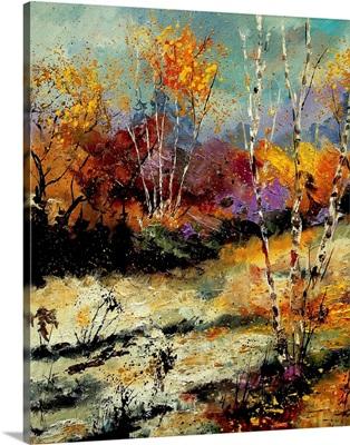 Birch Trees 459090