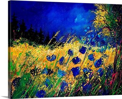 Blue Cornflowers 450908