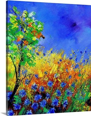 Cornflowers 451170