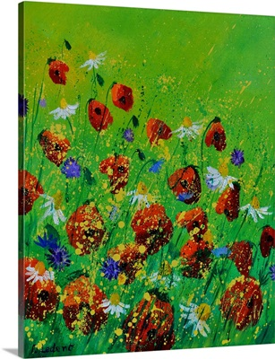 Poppies 67070
