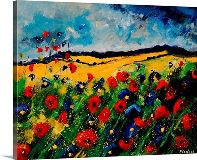 Red And Blue Poppies 45