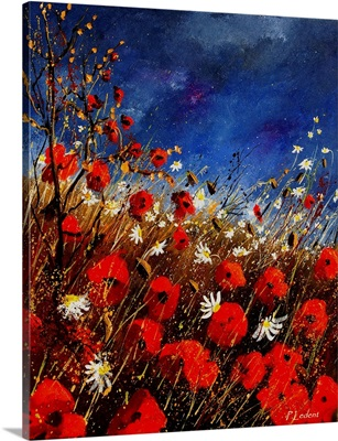 Red Poppies 560908