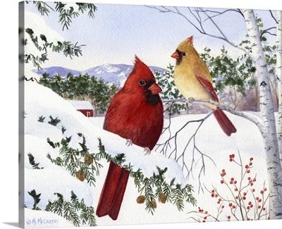 Cardinals and Hemlock Tree