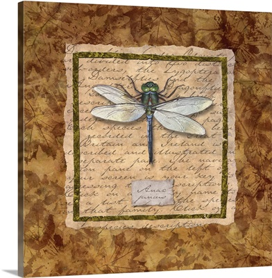 Dragonfly-White