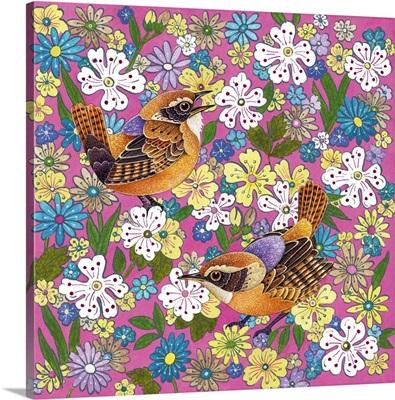 May Wrens