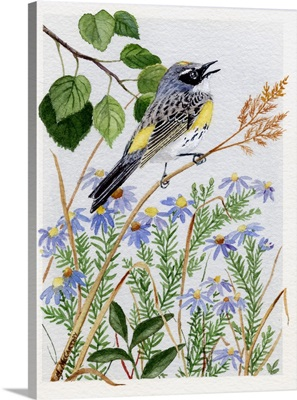 Myrtle Warbler and Asters