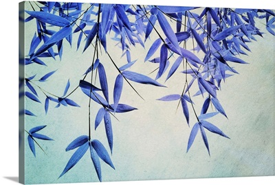 Bamboo Saturation